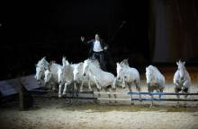 Cheval Passion, 33th year – Festival for horse lovers