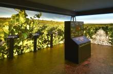 Musée du Vin - Maison Brotte