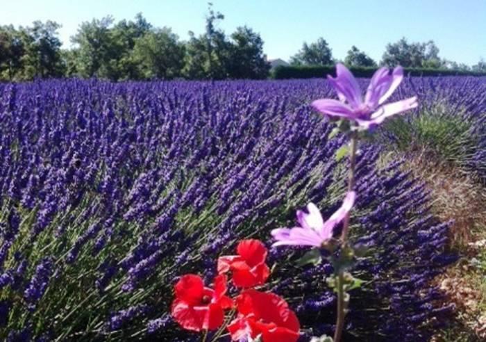 Avignon Prestige Tour