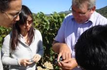 Wine Safari
