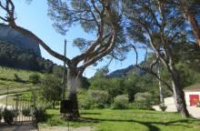 Fenouillet Domaine de Cassan