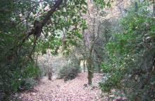 """Entdecken Sie das Naturschutzgebiet """"Petit (...)"""