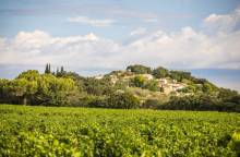 Cycle route - The Plan de Dieu vineyards (...)