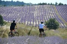 Terre de lavande - Mountain Bike Trail No 8
