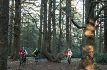MTB trail no. 49 - The Cedar forest on the (...)