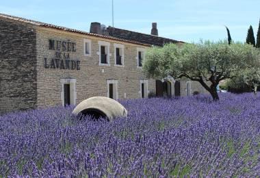 Musée de la Lavande