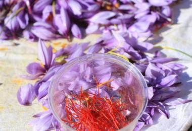 Safran en pistils - Aurélie Bathelier