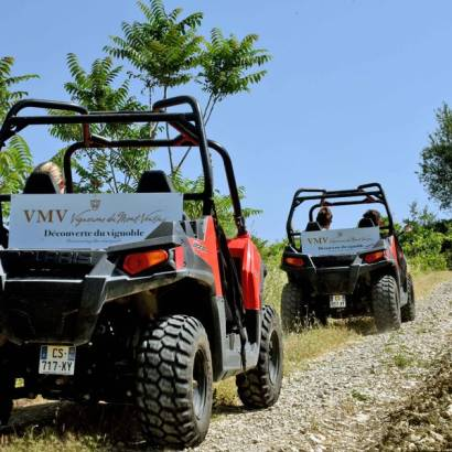Buggy trail in the vineyards